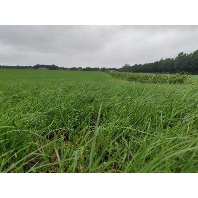Grondonderzoek grasland (kleigrond)